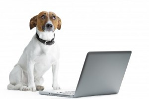 Dog with laptop, courtesy www.123rf.com